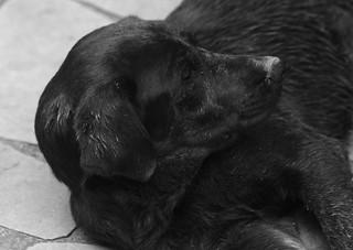 Cachorro! | by brittog