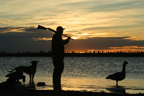 Photo of hunter, dog and good decoys silhouette against the water