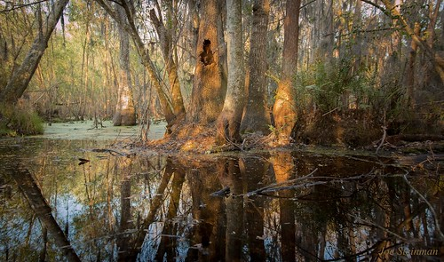 trees light lake inspiration nature water colors beautiful beauty sunrise landscape photographer artistic florida pastel magic beautifullight inspirational pastoral naturalbeauty magical soe tistheseason landscapephotography beautifulearth magicallight landscapebeauty elitephotography