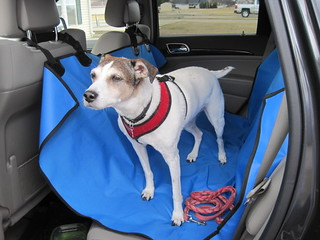 dog seat cover 06 | by Everyday Snapshot