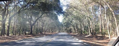 road trees island southcarolina ontheroad hiltonhead hiltonheadisland hiltonheadsouthcarolina lowcountrylife appleiphone5c