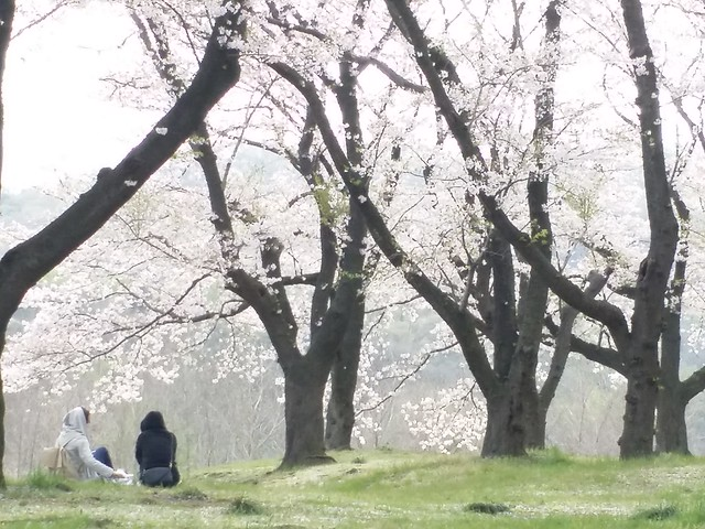 [EXPLORE]久方の光のどけき春の日に For the first time in a long time of light sparkling spring day