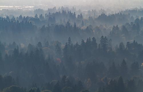 trees oregon portland us haze lowlight dusk unitedstatesofamerica contrejour councilcrestpark