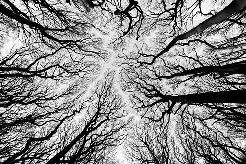 trees winter contrast blackwhite fisheye 8mm wirral samyang easthamwoods easthamferry monography