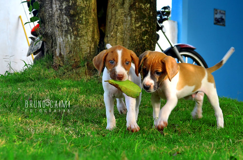 Dogs and the leaf | by Bruno_Caimi