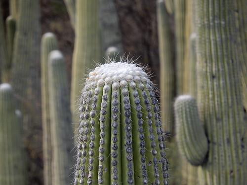 Jardin Botanico Helia Bravo Hollis - cactus - 2