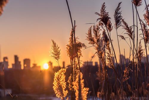 winter sunset toronto ontario canada nature downtown east citysunset