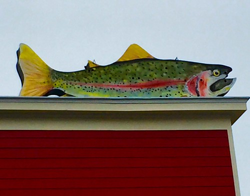 virginia trout rainbowtrout cidery highlandcounty nottobeusedwithoutmypermission adfimages