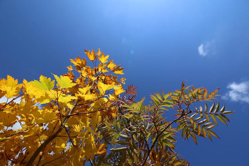 2014-09-28_00724_栗駒山.jpg