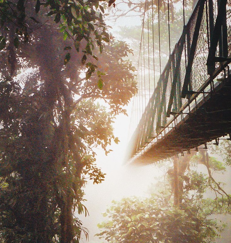 Film Friday 6/? is from a 2005 trip to Costa Rica with my brother. There's a pretty good reason why Monteverde Cloud Forest is so named. We ziplined and trekked into the clouds - from most bridges we couldn't see the other side, the ground below or the fo