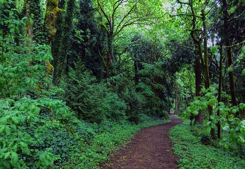 green ellen trail lush davis vancouverwashington