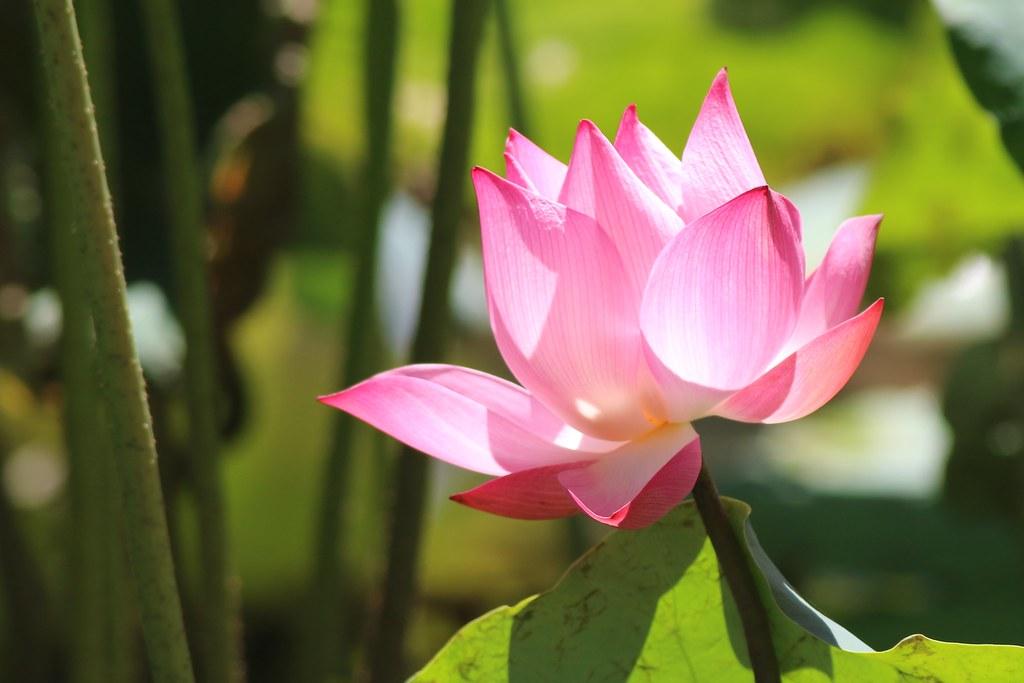 data sgp lotus group