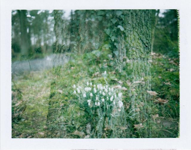 Frühling/ Spring's coming - I shot film