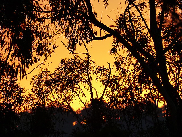 sunset among the gumtrees [Explore-2016-04-26]