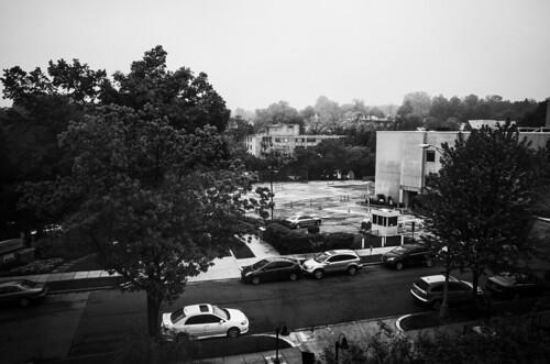 misty morning (118)