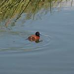 So, 20.12.15 - 17:11 - Lagune Nimes - El Calafate