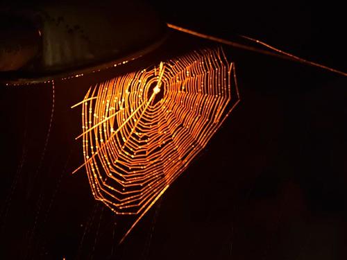 spider web under the street light...