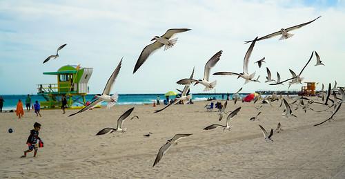 urban walking seagull miamibeach exploration seashore sobe
