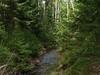 Lesy v okolí rybníků, foto: Petr Nejedlý