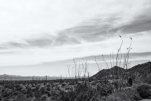 park arizona cactus blackandwhite bw mountains monochrome rocks desert tucson outdoor background stock az saguaro ocotillo arizonasonoradesertmuseum desertplants