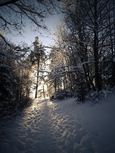 morning blue trees winter sunset sky sun white snow nature landscape town frost outdoor path branches latvia backlit sunlit aluksne