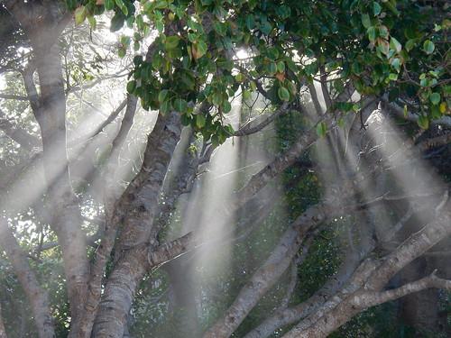 Lo de Marcos - licht