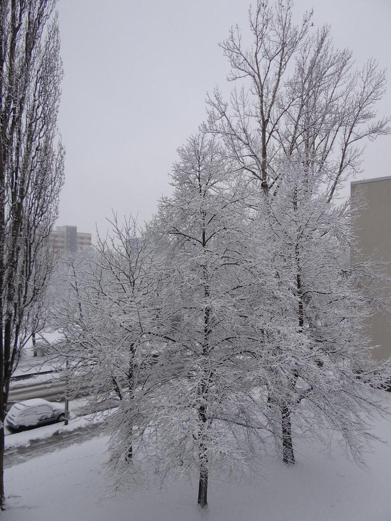 Schneeweisse Flocken fliegen vom Winterhimmel, fühle selbst im Wirbeltanze die Flocken wiegen, dicht und dichter das Gewimmel, eine Flocke bin ich nun, wieviel Flocken braucht der Himmel, die Erde umhüllt sich langsam mit Weiss 3244