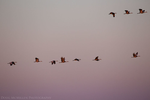 sunset nebraska migration sandhillcranes april2016