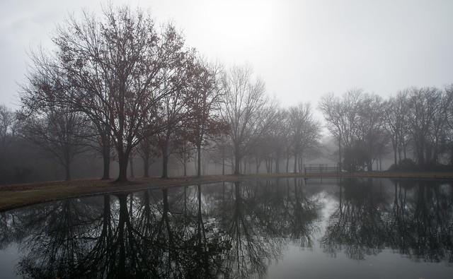 Fog Over Pond