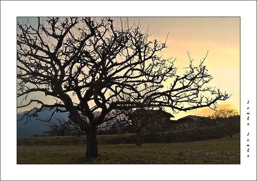 sunset panorama ski tree landscape tramonto trento albero sci trentino dolomiti madonnadicampiglio sunvalley folgarida marilleva valdisole dimaro dolomitidibrenta monclassico jambojambo samsunggti9070