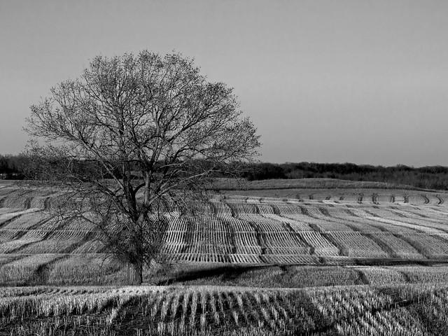 Evening Light, Black and White - P4298054bw2