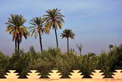 Menara Gardens / palms