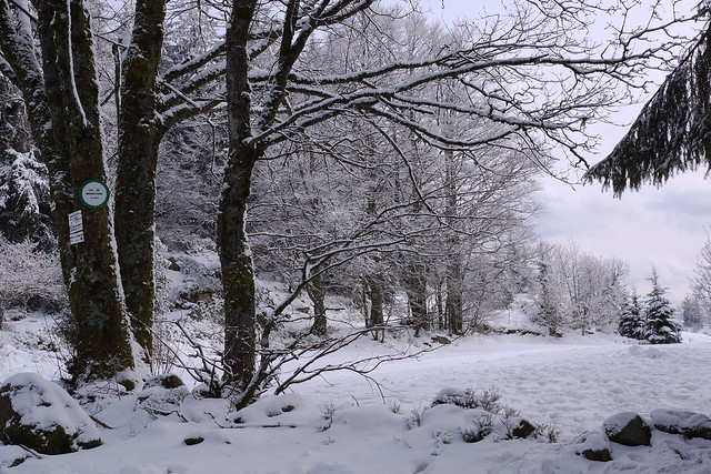 Les Vosges : col de Menufosse :900metres