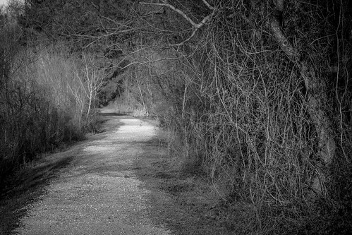 trees blackandwhite bw louisiana path trail blackwaterconservationarea