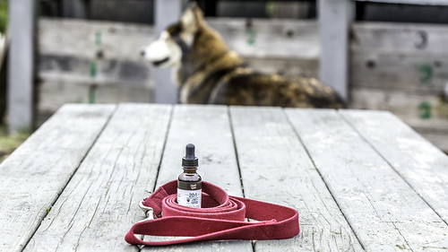 Treat Well cannabis tincture high CBD for pets. | by Cannabis Reports