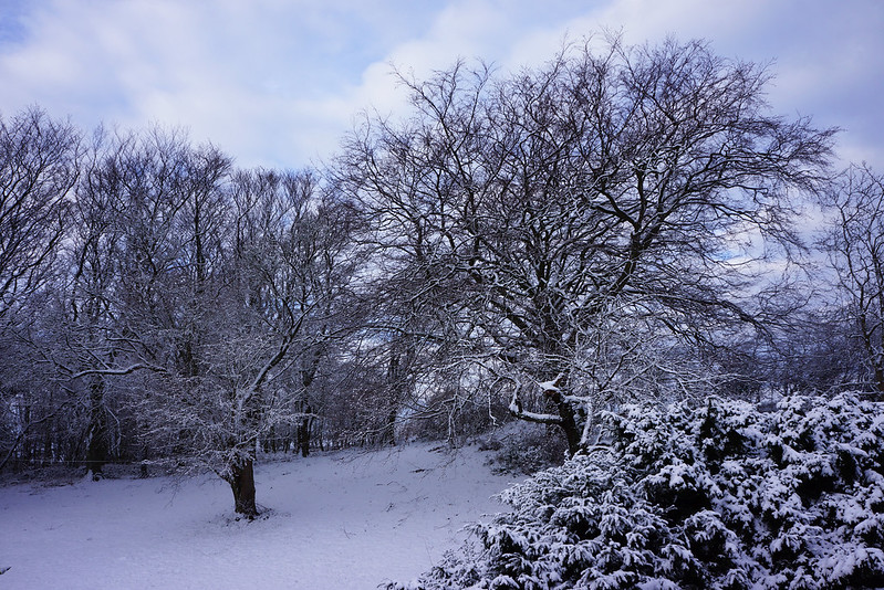 Vinterhave-midtjanuar-2016 (2)