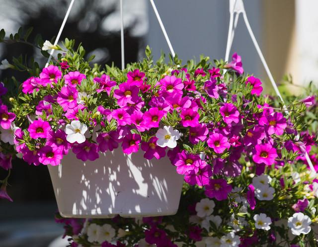 Basket of Spring