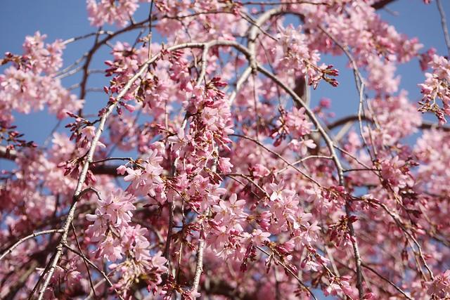 土, 2016-03-26 14:53 - Brooklyn Botanic Garden