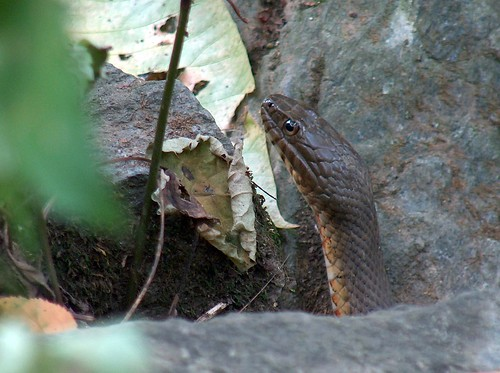 Snakes Head   by gawnesco