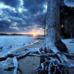 dead sunset orton