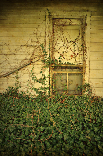 door old color detail green abandoned nature overgrown leaves vines kentucky ivy front louisville suburbanality