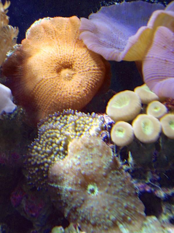 08192007 Saltwater Fish Tank (23) - Version 2
