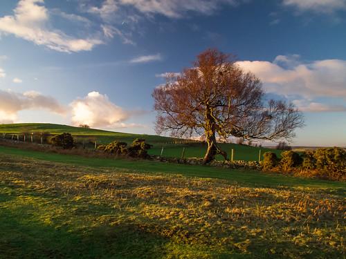 Landscape tree | by madein.w