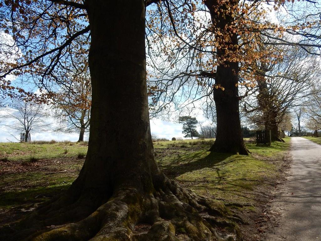 Trees, Knole Park Knole Park, Sevenoaks to Westerham