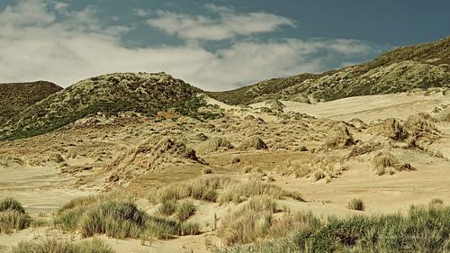 newzealand beach beautiful grass bay coast sand wind dunes dune hill olympus coastal southisland otago dunedin otagopeninsula e5 sandymount sandflybay dunescape windblasted microfourthirds duncancunningham ilobsterit duncanmc42