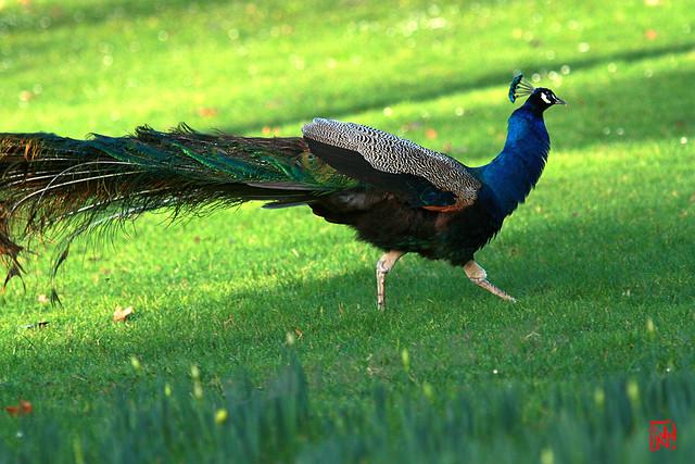 Atterrissage en douceur sur la pelouse....