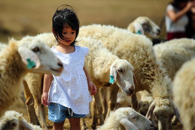 Lạc giữa bầy cừu