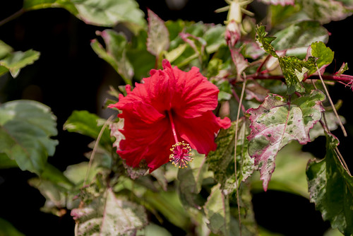 chennai dof dakshinachitra depthoffield flowers heritage heritagemuseum india landscape nikon nikond810 southindia tamilnadu in nikkor2470mmlens 2016 february2016 bokeh rvkphotographycom rvkphotography rvkonlinecom