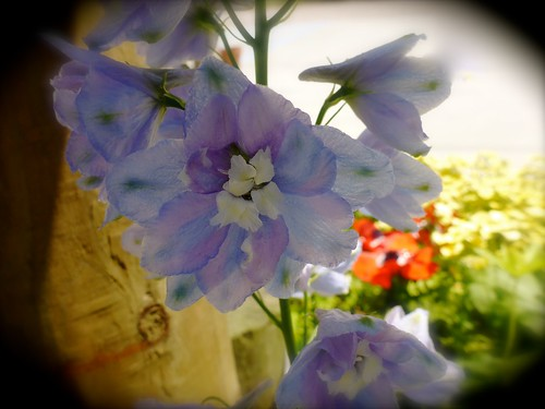 flowers flower adamhall trackhead trackheadstudios trackheadxxx