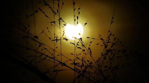 morning sun moon sunrise canon indonesia solar eclipse uv powershot filter jakarta filters partial cpl solareclipse matahari uvfilter cplfilter gerhanamatahari gerhana chdk matahariterbit sx50 parsial sx50hs canonpowershotsx50hs gerhanamatahariparsial